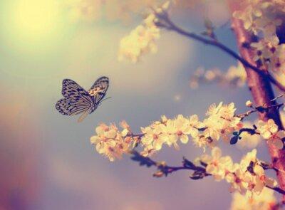 Canvastavlor Fjäril och körsbärsblom