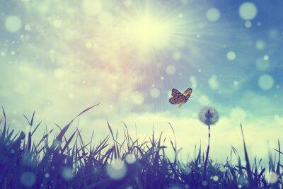Canvastavlor Fjäril och maskros