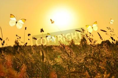 Canvastavlor Fjäril och sommaräng