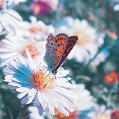 Canvastavlor Fjäril på blomman