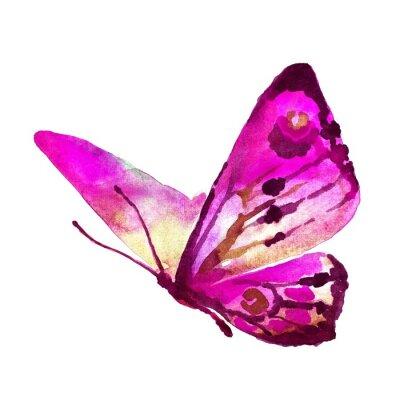 Canvastavlor fjärilar konstruktion