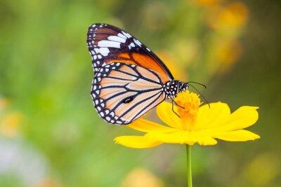 Canvastavlor Fjärilar och blommor