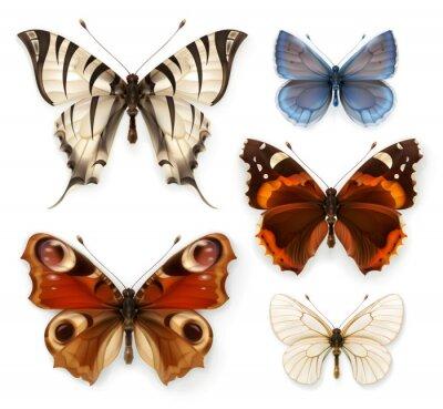 Canvastavlor Fjärilar, vektor ikoner set