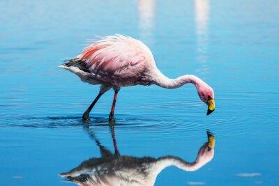 Canvastavlor flamingo