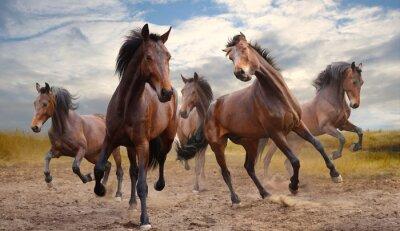 Canvastavlor flock hästar