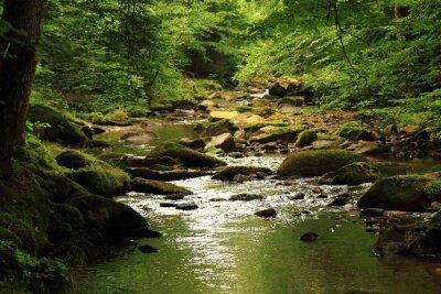 Canvastavlor flod i skogen