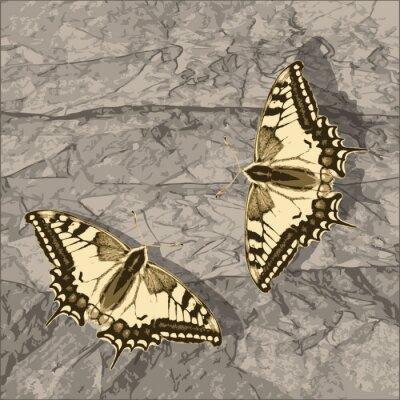 Canvastavlor Flygande fjäril över grunge vägg.