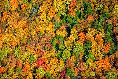 Canvastavlor Flygfoto falla lövverk i Vermont.