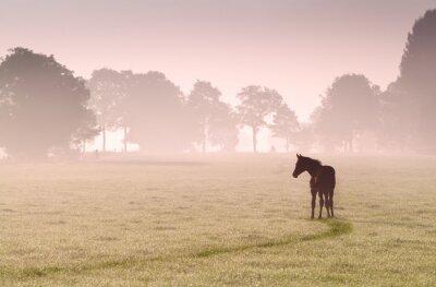 Canvastavlor föl silhuett på bete i dimma