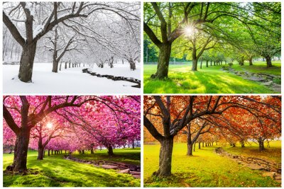 Canvastavlor Four seasons with japanese cherry trees in Hurd Park, Dover, New Jersey