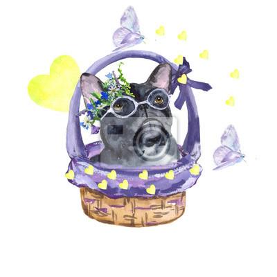 Canvastavlor Fransk bulldog. Hundras Fransk bulldogg i korgen. Kärlek, vår, fjärilar. Akvarellmålning. Kan användas för vykort, tryck och utformning