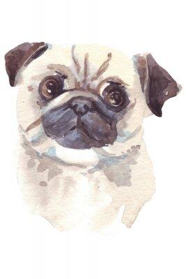 Canvastavlor French bulldog illustration