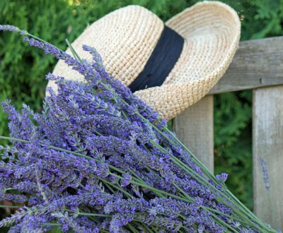 Canvastavlor Fresh Cut lavendel med Garden Hat