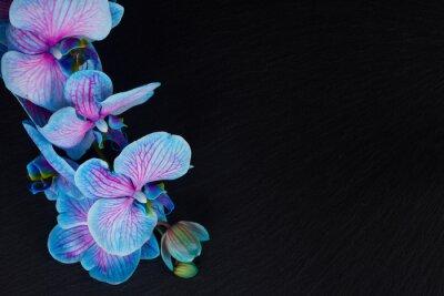 Canvastavlor Gäng violett orkidéer