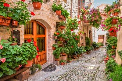 Canvastavlor Gata i liten stad i Italien i sommar, Umbrien