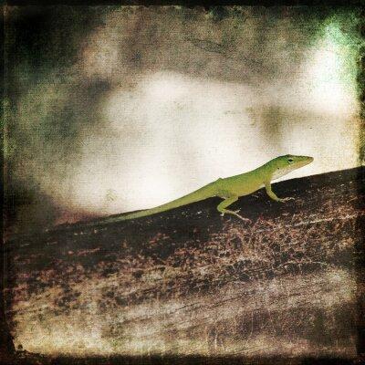 Canvastavlor Gecko Grön Cameleon Ödla på Brun Wood Branch