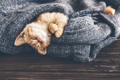 Canvastavlor Gigner kattunge sovande