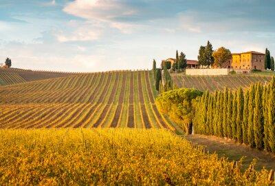 Canvastavlor Golden vineyards in autumn at sunset, Chianti Region, Tuscany, Italy