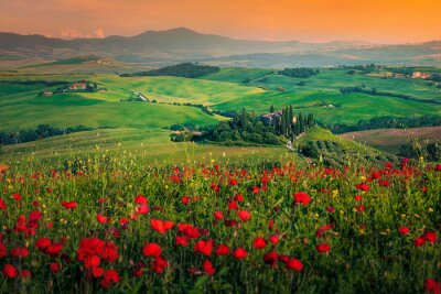 Canvastavlor Grain fields with red poppies at sunset in Tuscany, Italy
