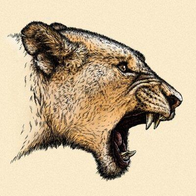 Canvastavlor gravera lejon illustration