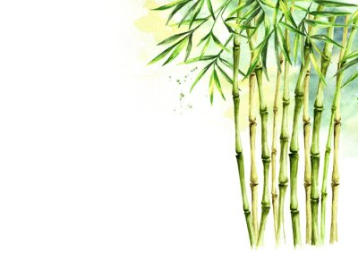 Canvastavlor Green bamboo background, stems and leaves, Asian rainforest. Watercolor hand drawn  isolated illustration