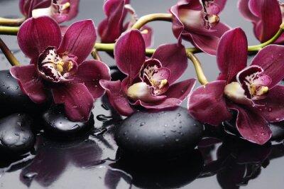 Canvastavlor gren röd orkidé med terapi stenar