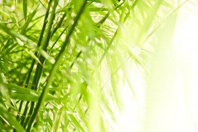 Canvastavlor Grön bambu bakgrund