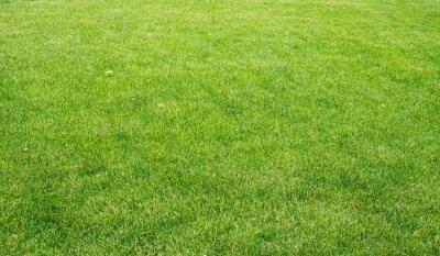 Canvastavlor grön gräsmatta