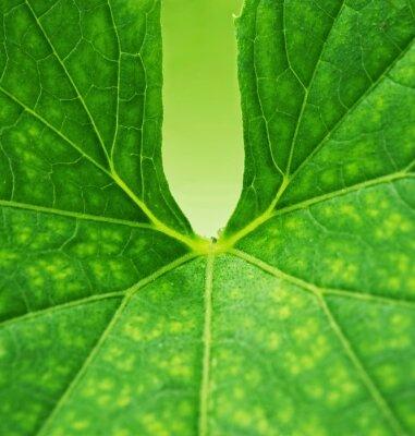 Canvastavlor Gröna blad bakgrund