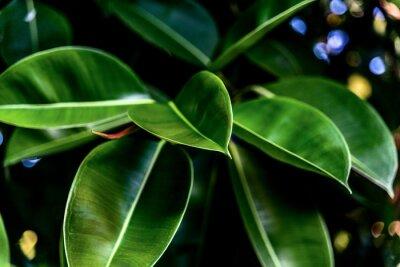 Canvastavlor Gröna färska blad