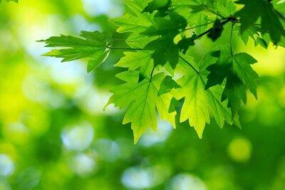 Canvastavlor gröna löv