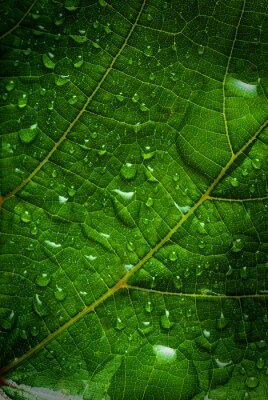 Canvastavlor grönt löv