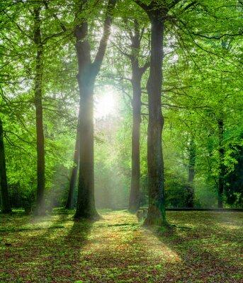 Canvastavlor Grüner Wald im Sommer mit Gegenlicht