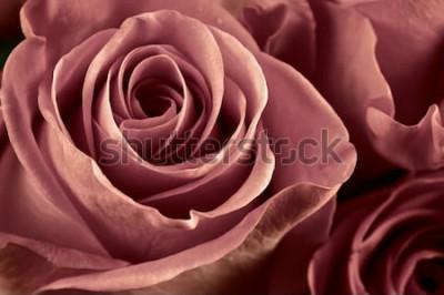 Canvastavlor Grupp av marsala färgade rosa blommor närbild som bakgrund. Mjukt fokus, grunt DOF. Filtrerad bild.