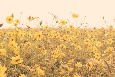 Canvastavlor gul blomma fält äng retro