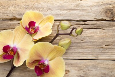 Canvastavlor Gul orkidé.