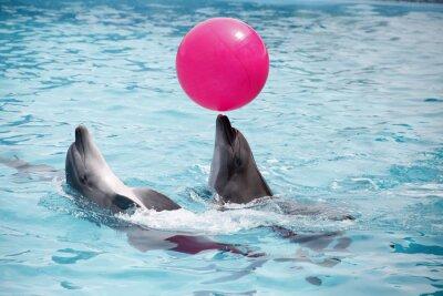 Canvastavlor gulliga delfiner under ett tal vid delfinarium