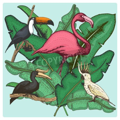Canvastavlor hand drawn vector realistic bird, sketch graphic style, set of domestic. cockatoo parrot and rhinoceros hornbill, toco toucan and flamingo