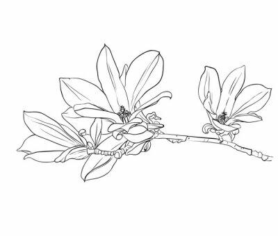 Canvastavlor Handritad magnolia blommor.