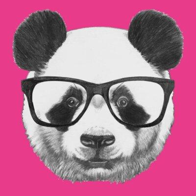 Canvastavlor Handritad porträtt av Panda med glasögon. Vector isolerade element.