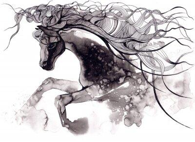 Canvastavlor häst