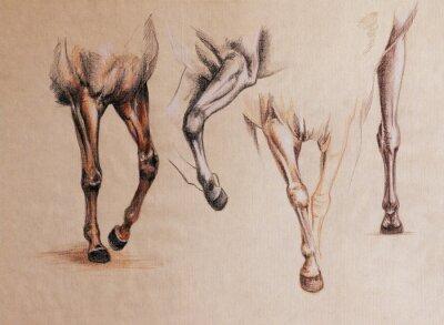 Canvastavlor häst ben studie