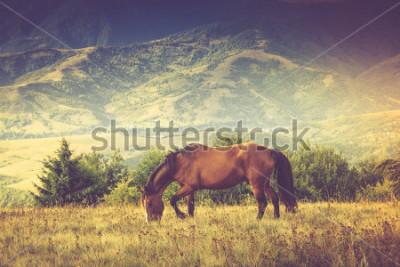 Canvastavlor Hästar betar mot berg. Höstlandskap. Filtrerad bild: Korsad bearbetad tappeffekt.