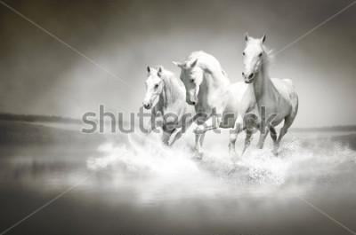 Canvastavlor Heh av vita hästar som löper genome vatten
