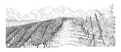 Canvastavlor Hill of vineyard landscape with city, clouds on horizont hand drawn sketch vector illustration isolated on white