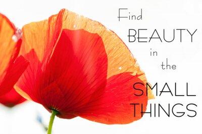 Canvastavlor Hitta skönhet i de små sakerna. Motivation inspirerande citat