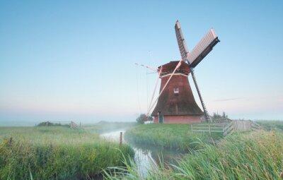 Canvastavlor Holländsk väderkvarn i morgonljuset