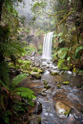 Canvastavlor Hopetoun Falls, en avskild vattenfall i Otway Ranges, Australien