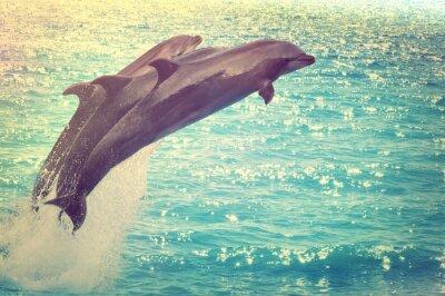 Canvastavlor hoppar delfiner