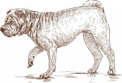 Canvastavlor hund på en promenad